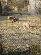 20071219_zoo5