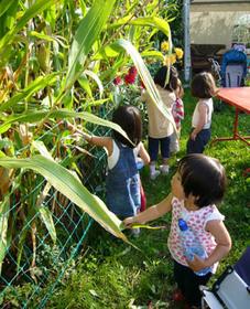 20080910_corn