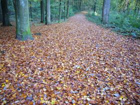 20081017_leaves