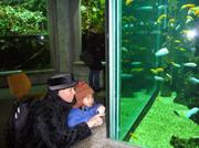 20081228_aquarium