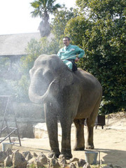 20090202_elephant_2