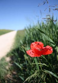 20090519_flower_2