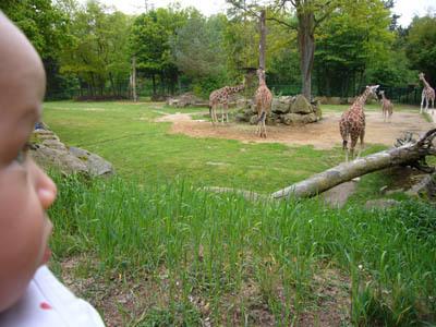 20100400_zoo_giraffe
