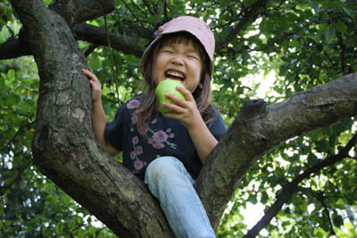 20100819_n_auf_dem_apfelbaum