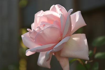 20101012_rosen