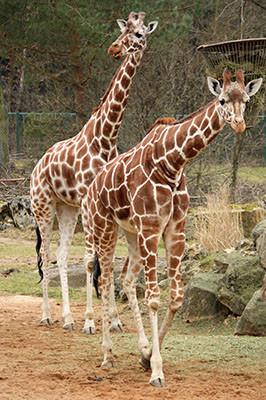 20120314_zoo_6