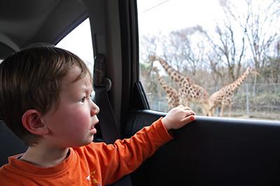 Safari_5