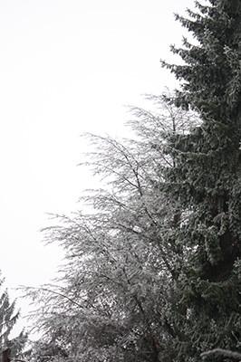 Winter_2_2