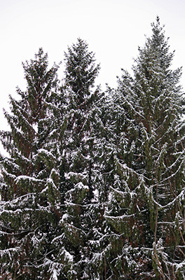 Schnee4_3