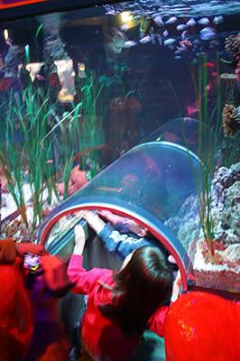 Aquarium_4