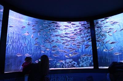 Aquarium_5
